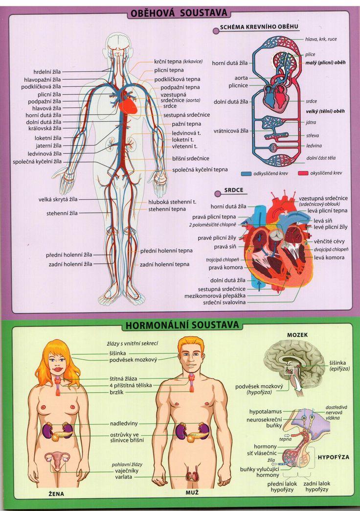 lidské tělo tabulka.8.jpeg