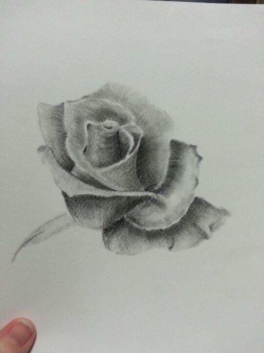 Drawing a rose - rosa a matita