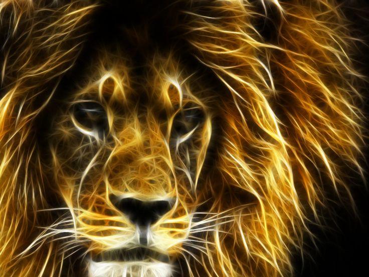 3d cool lion wallpaper 3d wallpapers all types