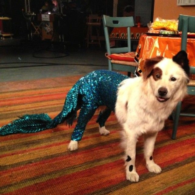 I know your checking out my tail #dwab #dogwithablog #tail #mermaid #blue #disneychannel #disney #kitchen
