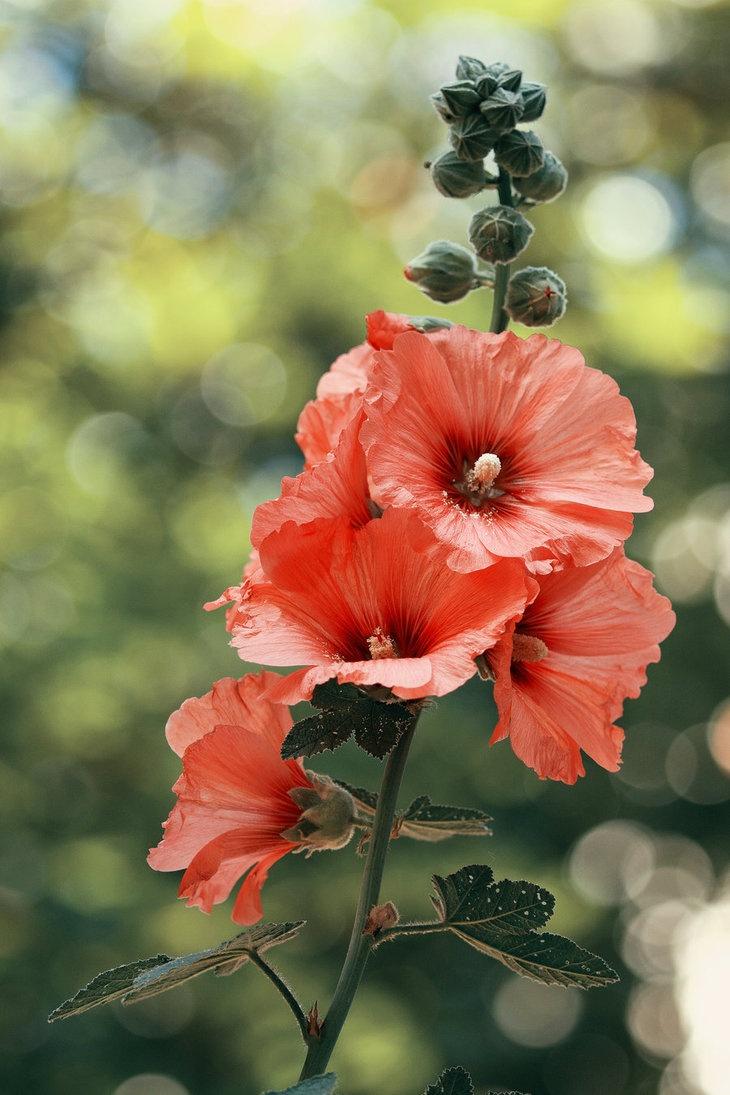520 best Flowers images on Pinterest | Flowers garden, Gardening and ...