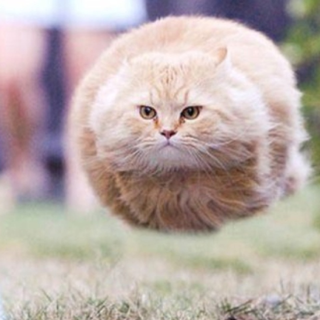 Hover cat | ANIMALS / DOGS / CATS / BIRDS / HORSES / ETC ...