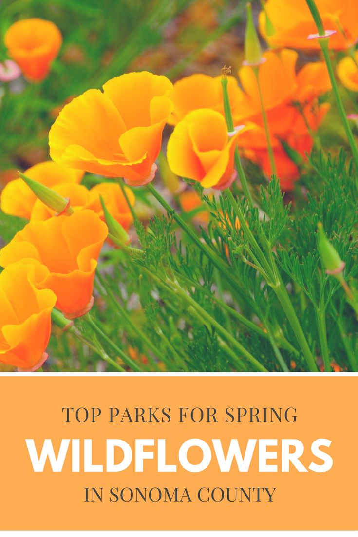 Top Parks for Spring Wildflower Walks In Sonoma County | Sonoma County, CA