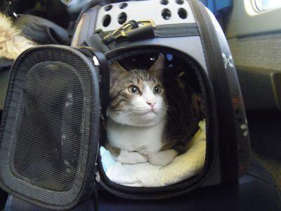 Borsa Trasportino per Gatto #trasportino #borsa #gatto http://www.principini.it/prodotti/gatti/borsa-trasportino-per-gatti