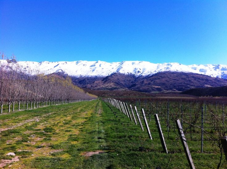 Spring at the Amisfield Winery & Vineyard, NZ