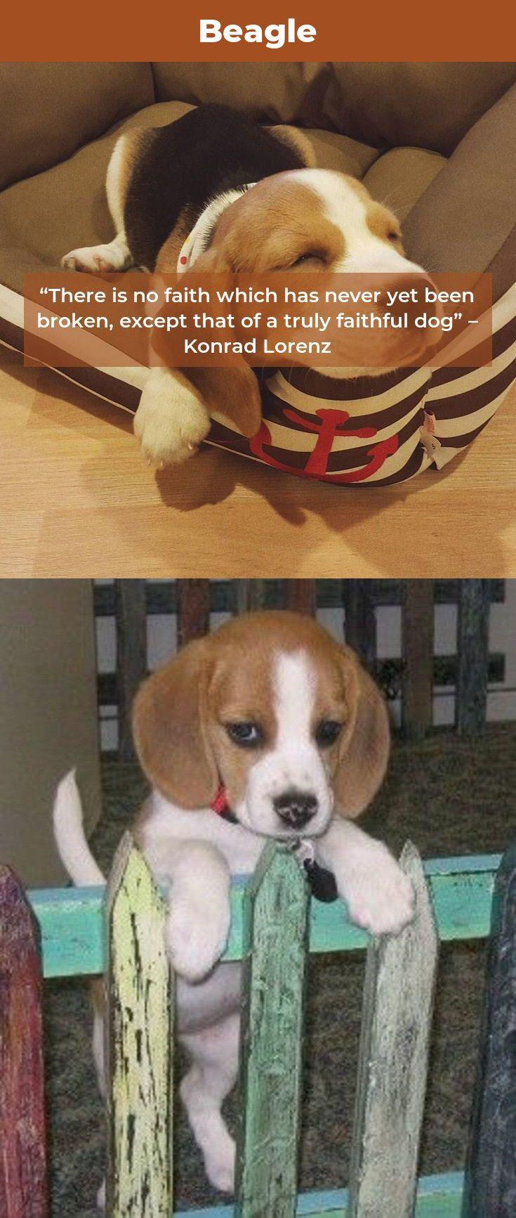 Beagle Beaglepuppy Beagles Mix Beagle Beagle Puppy Beagle Names