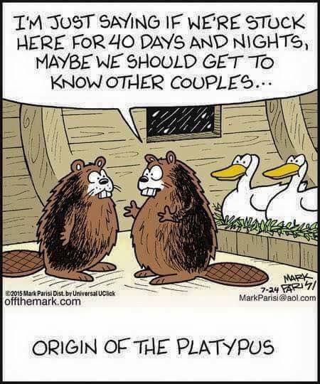 The origin of platypus!