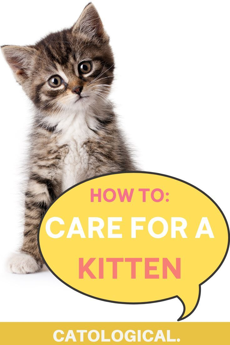 How To Care For And Take Care Of A New Baby Kitten Like An Expert In 2020 Cat Wheezing Cat Training Kitten Care