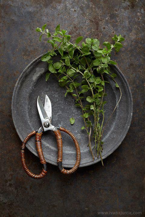 fresh oregano | food photography
