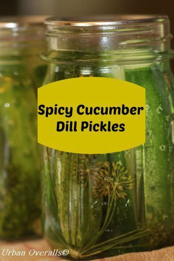 How to make spicy cucumber dill pickles.  This is a water bath method for canning.