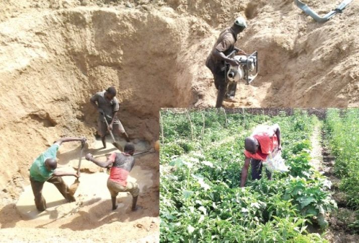 Upper East farmers abandon tomato cultivation due to lack of guaranteed market - http://www.ghanatoghana.com/upper-east-farmers-abandon-tomato-cultivation-due-to-lack-of-guaranteed-market/