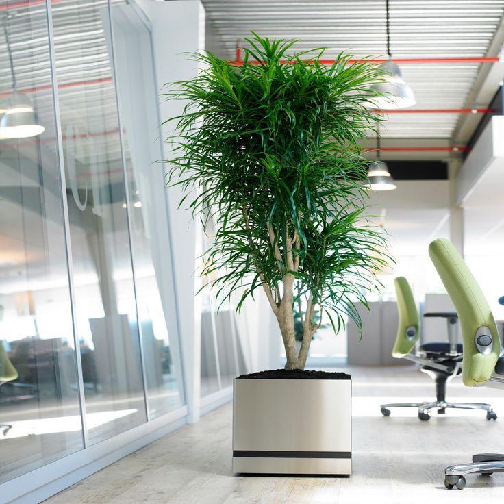 Superline Trend Plus. Picture by Plants XL