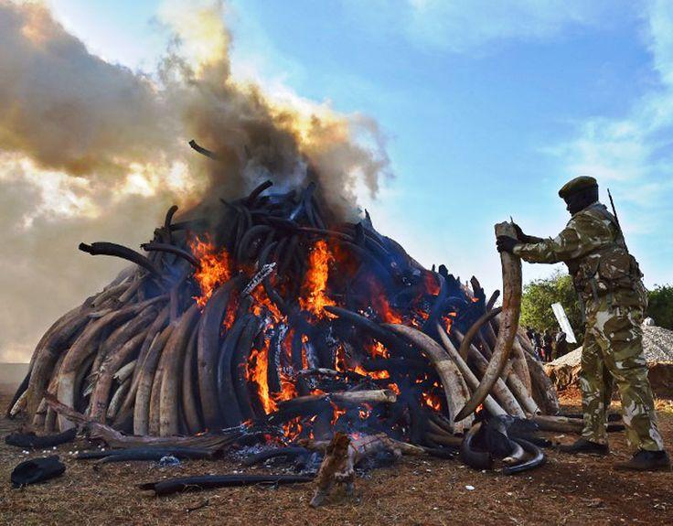 protección al medio ambiente imágenes de elefantes muertos - Buscar con Google