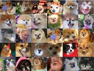 The Pomeranian Rescue Group saved my sweet pooches from Death's Door!
