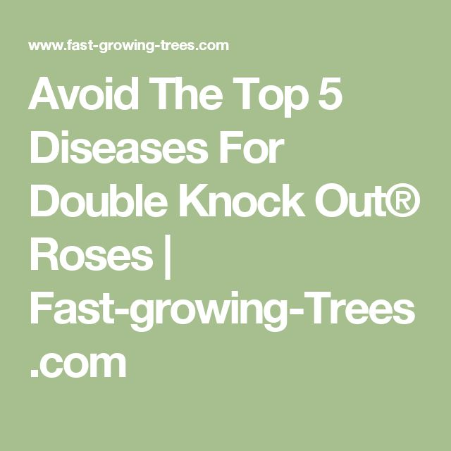 Avoid The Top 5 Diseases For Double Knock Out® Roses | Fast-growing-Trees.com