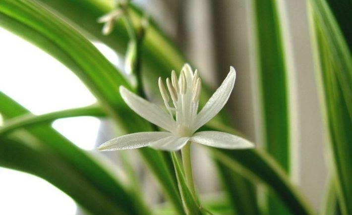 Túto rastlinu by ste mali mať určite doma. Dokáže doslova zázraky! | Báječné Ženy