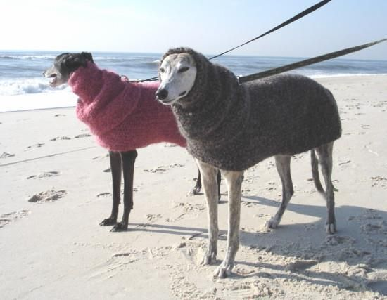 Quick & Easy Greyhound Dog Sweater Charlie, Rollie & Lucy. Pinter?