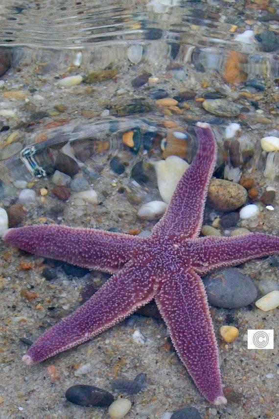 purple starfish in the waves