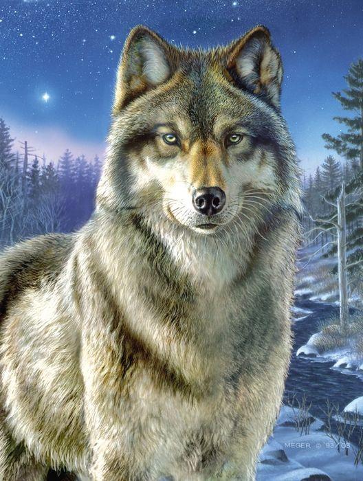 элементы картинки про волков на телефон традиционное блюдо