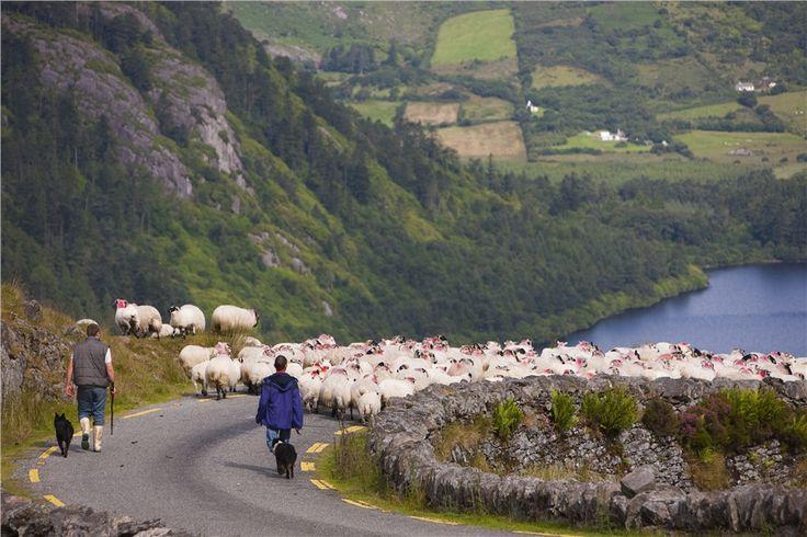 Ora di punta in Irlanda!