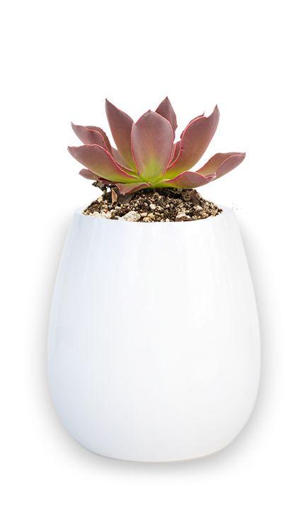 Itavi Plantas Nativas