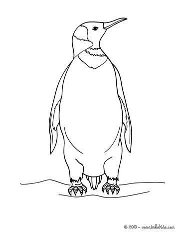 Penguin Coloring Page Nice Bird Sheet More Original Content On Hellokids