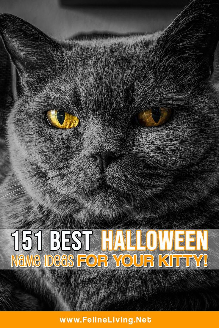 Felineliving Net Halloween Names For Cats Cats Funny Cat Memes