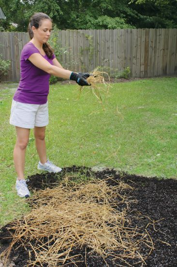Sprinkling wheat straw over a newly seeded lawn spot