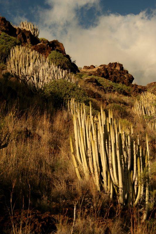 Kanári-szigetek - La Palma - Világutazó