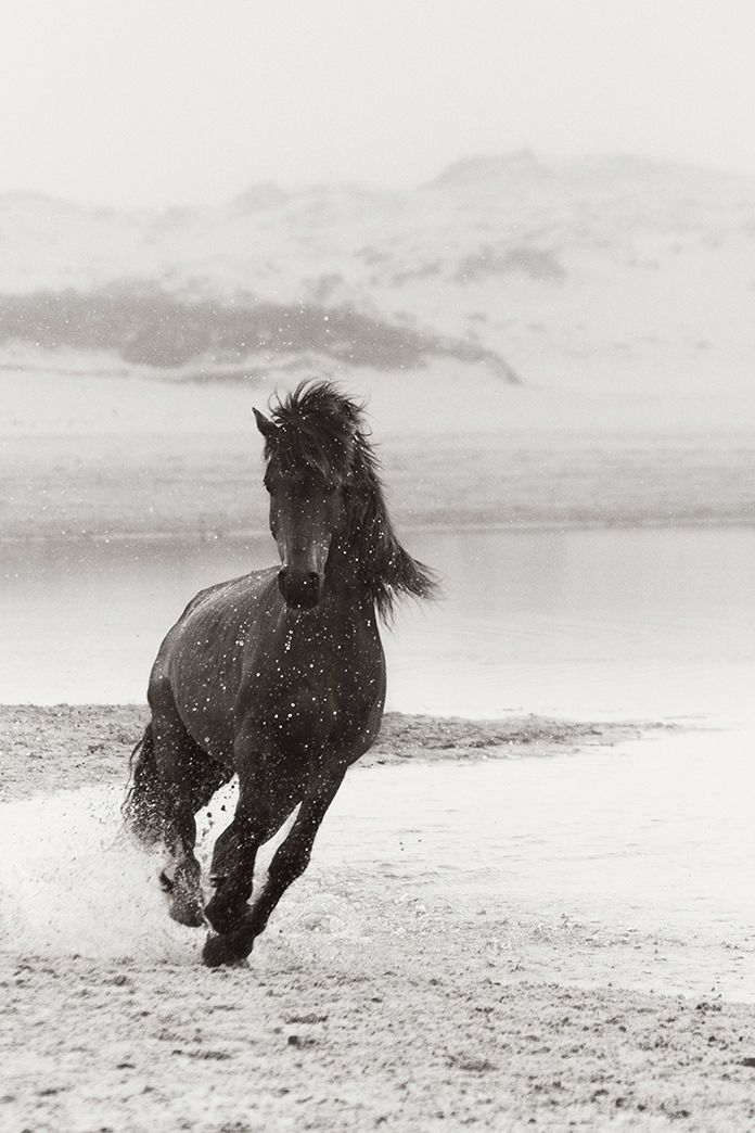 Discovering the Horses of Sable Island | Drew Doggett Photography