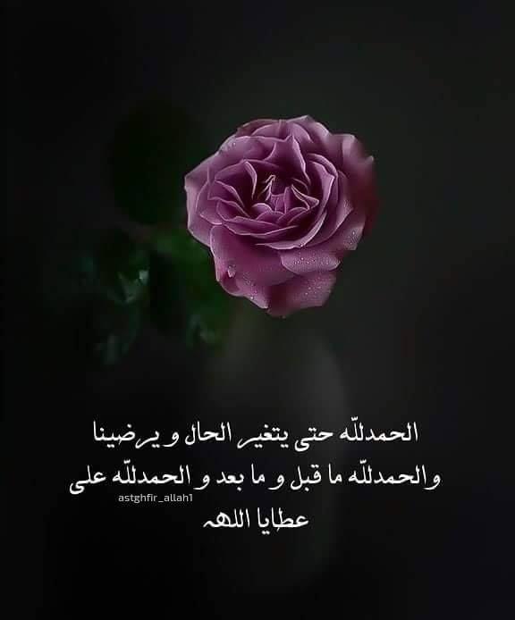 الحمد لله رب العالمين حمدا كثيرا طيبا مباركا فيه ملء السموات و ملء الأرض و ملء ما شئت بينهما Plants Islam Rose