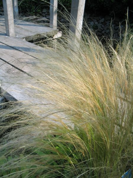 De Tuinen van Appeltern - Plantenencyclopedie - Stipa tenuissima - Vedergras