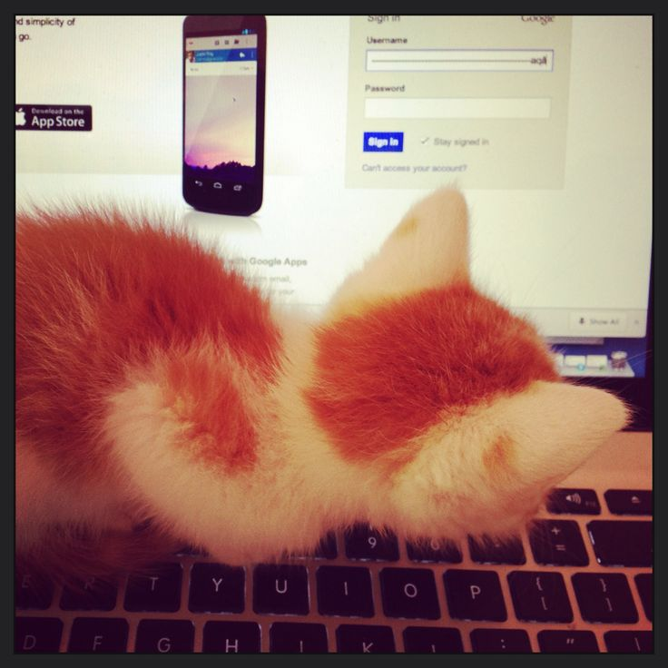 Fudge opening a Gmail account.
