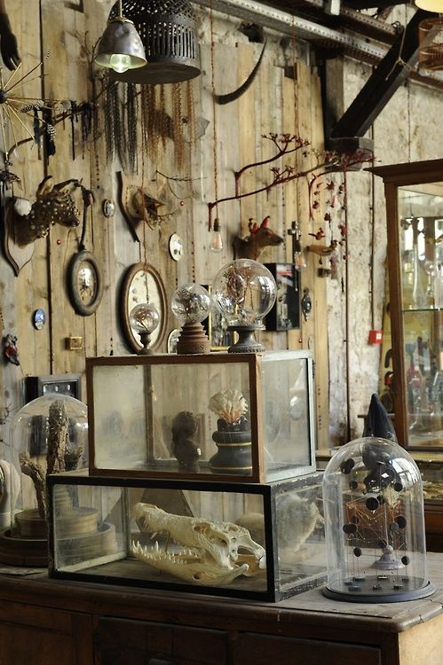 Best 25 taxidermy display ideas on pinterest victorian Oddities home decor