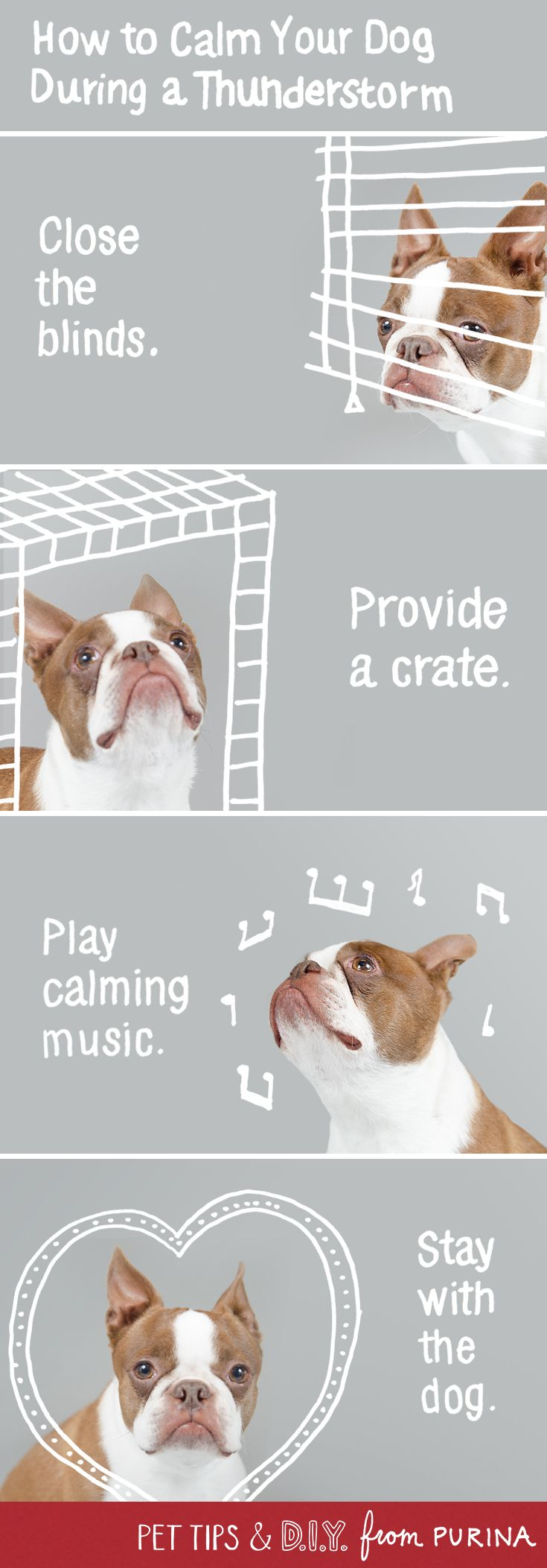 Help calm your dogs anxiety during thunderstorms with these dog calming tips!