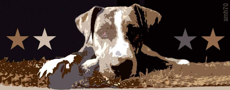 Verzweifelte Hundebesitzer, die sich völlig unsicherund hilflos ihrem knurrenden Hund nähern. Dieser fletscht die Zähne in die Kamera und wir wissen sofort: Das ist ein RedZoneDog! Ein aggressiver…