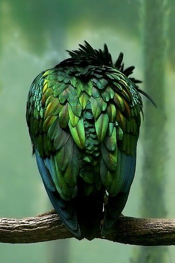beautiful green feathers - I have no idea what kind of bird this is, but it sure…