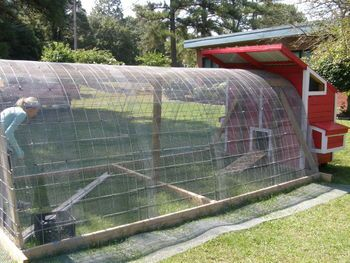 hoop house chicken run with pallet made coop
