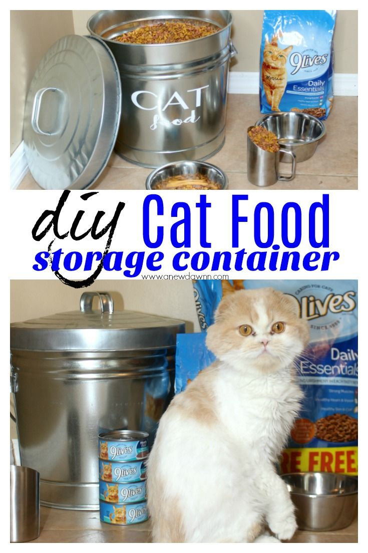 Diy Cat Food Storage Container Canned Cat Food Cat Food