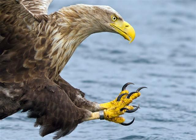 Look at the talons on that White-tailed Eagle | Marcus Conway