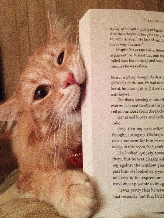 """I'd rather eat this whole book than let you read one. more. word. of it."""