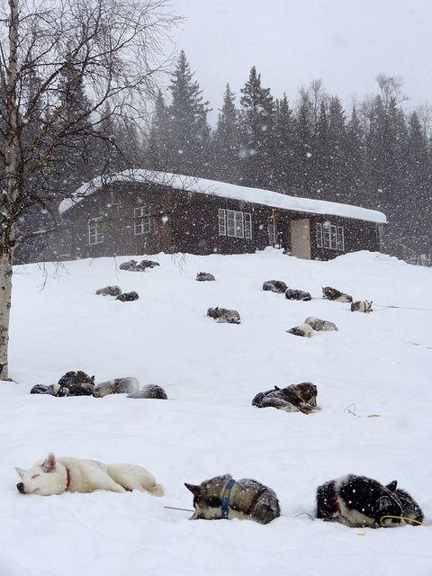 Sarek National Park, Lapland, Sweden