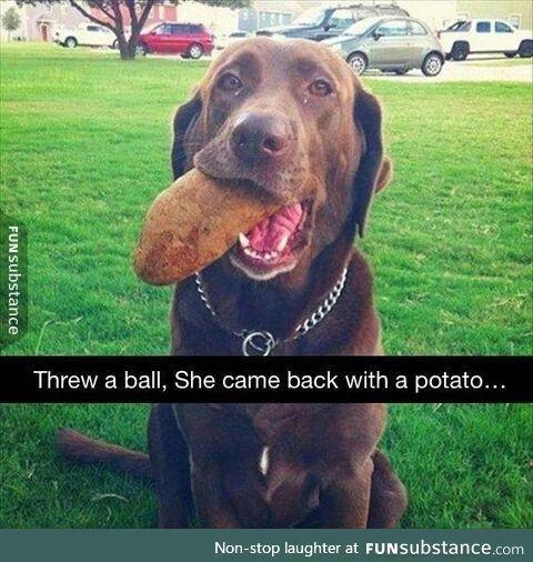 where did you get a potato