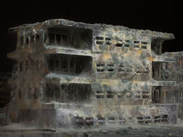 After Effects by Daniele Del Nero. A series of architectural scale models constructed with black paper and covered with flour and a layer of mould to create the effect of old abandoned buildings.