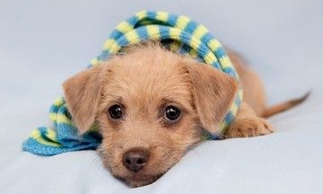 Puppy Mill Activists Remind Everyone This Black Friday - Puppies Aren't Presents