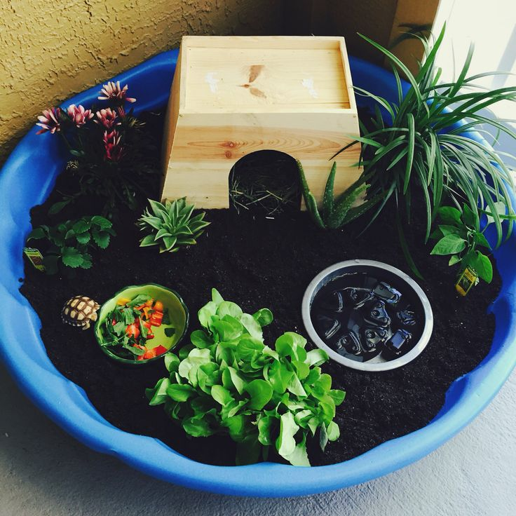 Pet turtle...  diy Tortoise Habitat from a kiddie  pool!