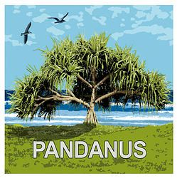 Pandanus Tree - what's not to love about these distinctive, quirky, bush tucker, tropical, coastal, shady trees?