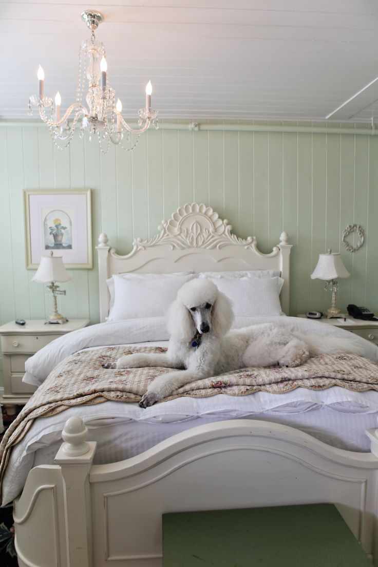 best poodles images by winnie montemayor on pinterest pets