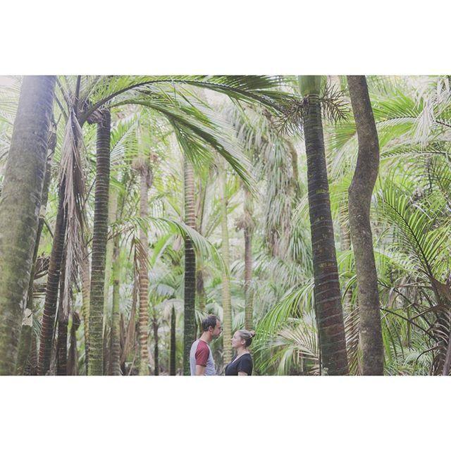 So over here on the Kapiti Coast, you get locations like this! THIS!  #this  #palmtreeheaven  #nikaupalm  #engagementshootkapiti #kapiti  #kapitiweddings