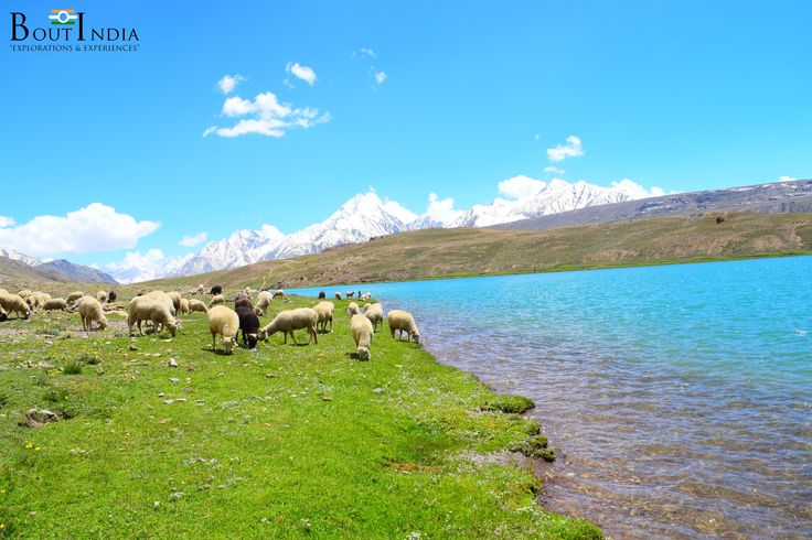 This sweet water lake is 2.5km wide. During spring time, these meadows are carpeted with hundreds of kinds of wildflowers.  #triptoindia #tourindia #boutindia #experience #travel #travelindia #summertrip #adventure #adventures #himalaya #himalayas #trek #camping #chandratal #spitivalley #himachal #mountains #mountainlake #journey #travelphotography